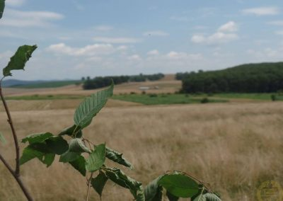 2016.07.20 Celtic Transilvania (TT) Romania 05